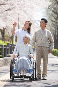 花見をする車椅子の老夫婦と看護師の写真素材 [FYI02830125]