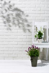 白い壁と椅子と観葉植物と花の写真素材 [FYI02830203]