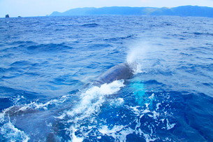 近寄るザトウクジラと渡嘉敷島の写真素材 [FYI02830608]