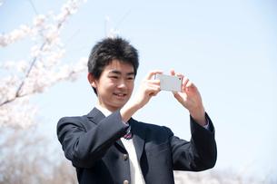 桜と携帯電話で写真を撮る男子高校生の写真素材 [FYI02830624]