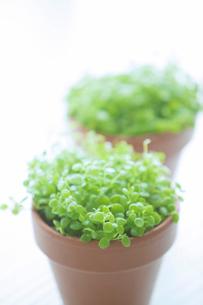 観葉植物の写真素材 [FYI02830648]