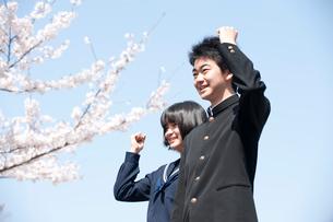 桜と中学生男女の写真素材 [FYI02830762]
