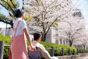 花見をする車椅子の老人と介護ヘルパーの写真素材 [FYI02830816]
