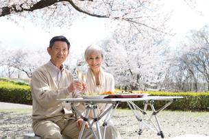 花見でシャンパンを飲む老夫婦の写真素材 [FYI02830855]