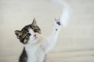 子猫の写真素材 [FYI02830858]