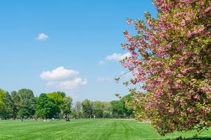 グレートローンに咲く桜と新緑と青空と雲と寛ぐ人々。の写真素材 [FYI02830916]