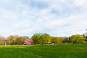 セントラルパーク グレートローン新緑の中に咲く桜の木の写真素材 [FYI02830940]