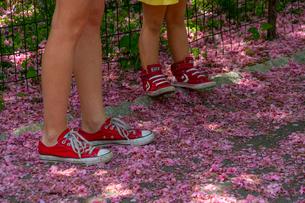 セントラルパークの小道を覆う桜の花びらと赤いスニーカーを履いた女の子と母親。の写真素材 [FYI02830943]
