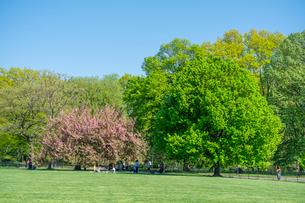 グレートローンに咲く桜と新緑と青空と寛ぐ人々。の写真素材 [FYI02830973]