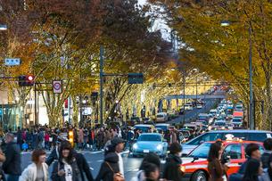夕暮れクリスマスイルミネーションに輝く表参道の並木を通り抜ける車と人々の写真素材 [FYI02830981]