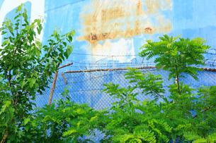 ブルックリンの石油タンクと新緑とフェンスの写真素材 [FYI02831077]