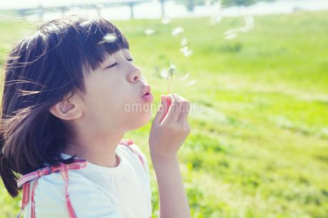 タンポポの綿毛を持つ女の子の写真素材 [FYI02831306]