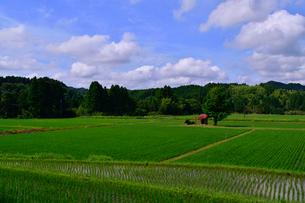 小さな鳥居と田園の写真素材 [FYI02831495]