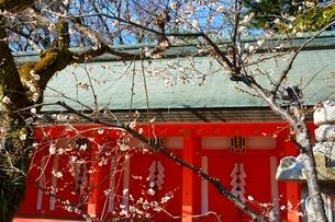 京都 北野天満宮 摂社の地主神社の写真素材 [FYI02831520]