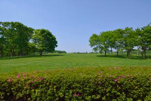 水元公園中央広場の新緑の写真素材 [FYI02831543]