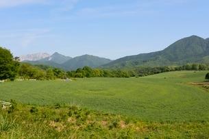 新緑,蒜山高原の写真素材 [FYI02831632]