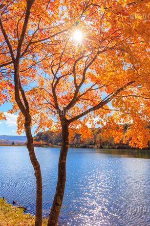 女神湖と紅葉の写真素材 [FYI02831831]