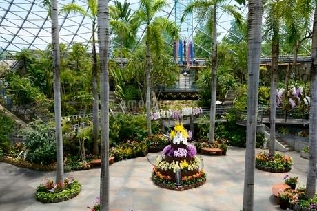 とっとり花回廊,フラワド-ム室内の花の写真素材 [FYI02831902]