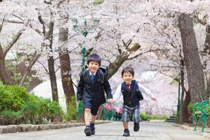 桜並木を走る兄弟の写真素材 [FYI02832205]