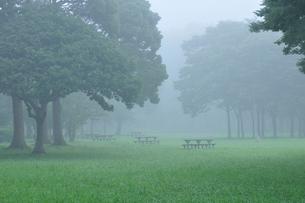 朝霧の水元公園中央広場の写真素材 [FYI02832305]