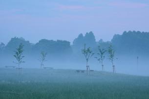 朝もやの水元公園中央広場の写真素材 [FYI02832475]