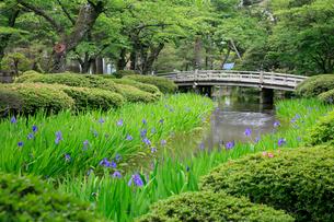 兼六園の花見橋とカキツバタの写真素材 [FYI02832652]