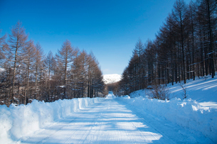 雪道 霧ヶ峰ビーナスラインの写真素材 [FYI02832806]