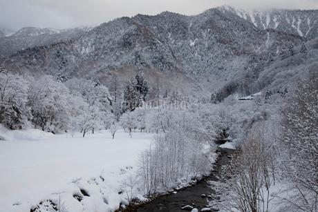 毛受母川(もずもがわ)の雪景色の写真素材 [FYI02832812]