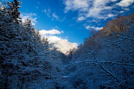 霧氷の木々の写真素材 [FYI02832891]