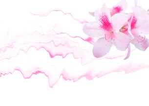 アザレアの花と抽象画の組み合わせのイラスト素材 [FYI02832912]