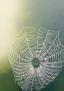 朝日が射している蜘蛛の囲のイラスト素材 [FYI02832989]