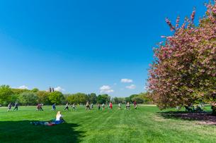 グレートローンに咲く桜と新緑と青空と寛ぐ人々。の写真素材 [FYI02833019]