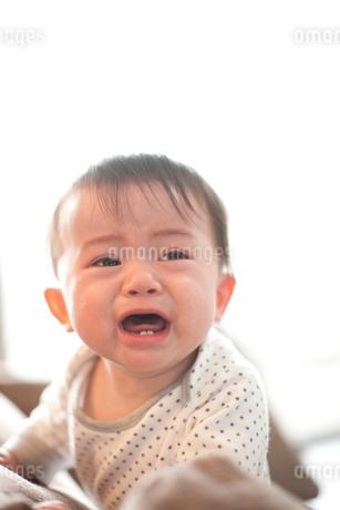 泣き顔の男の子の赤ちゃんの写真素材 [FYI02833069]