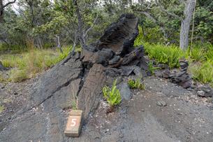 ハワイ島のハワイ火山国立公園 カフクユニット の溶岩樹型の写真素材 [FYI02833078]