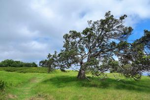 ハワイ島のハワイ火山国立公園 カフクユニット のトレイルの写真素材 [FYI02833082]