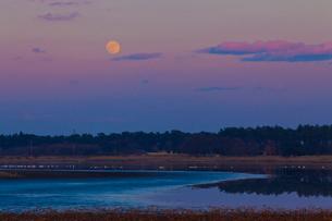 満月と多々良沼の写真素材 [FYI02833174]