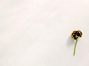 花と白い布の写真素材 [FYI02833265]