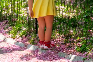 セントラルパークの小道を覆う桜の花びらと赤いスニーカーを履いた女の子。の写真素材 [FYI02833277]