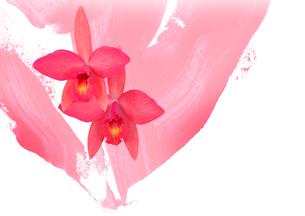 蘭の花二つと抽象画の組み合わせのイラスト素材 [FYI02833477]