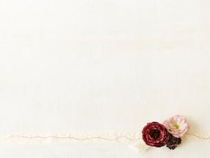 バラとリボンの写真素材 [FYI02833483]