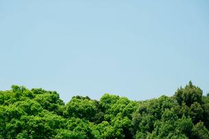 新緑の表参道の写真素材 [FYI02833574]