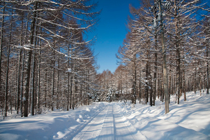 雪の並木道 霧ヶ峰ビーナスラインの写真素材 [FYI02833647]