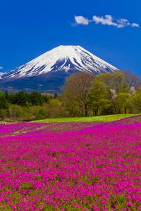 富士山と芝桜の写真素材 [FYI02833693]