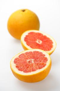 グレープフルーツの写真素材 [FYI02833744]