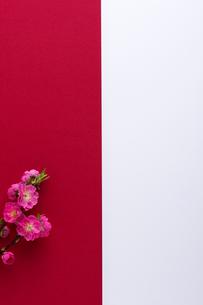 桃の花の写真素材 [FYI02833799]