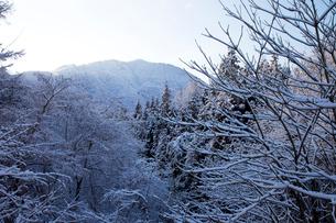 霧氷の木々の写真素材 [FYI02833803]