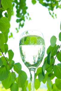 水と新緑の写真素材 [FYI02833820]