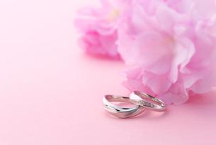 結婚指輪と桜の写真素材 [FYI02833941]
