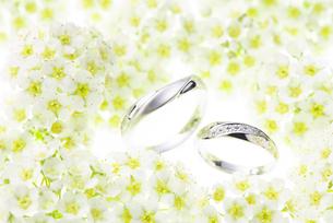 結婚指輪とコデマリの写真素材 [FYI02834029]