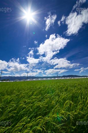 稲穂と耳納連山の写真素材 [FYI02834044]